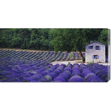 Fields of Lavender by Rustic Farmhouse by Owen Franken Photographic Print on Wrapped Canvas