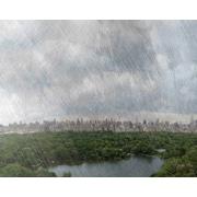 Carlyle Fine Art Landscape Central Park by Jordan Carlyle Photographic Print; 15'' x 20''