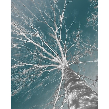 Carlyle Fine Art Nature In The Sky No.2 by Jordan Carlyle Graphic Art; 48'' x 36''