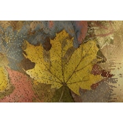 Carlyle Fine Art Nature Autumn Dissolve No.2 by Jordan Carlyle Graphic Art; 15'' x 20''