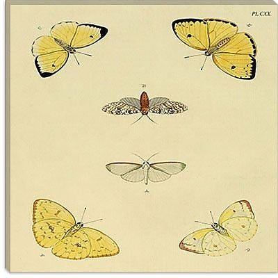 iCanvas ''Plate 120'' by Cramer and Stoll Graphic Art on Canvas; 37'' H x 37'' W x 1.5'' D