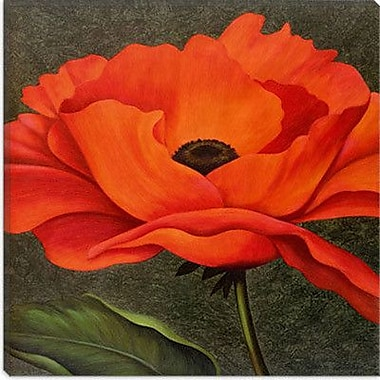 iCanvas ''Red Poppy'' by John Zaccheo Graphic Art on Canvas; 26'' H x 26'' W x 0.75'' D