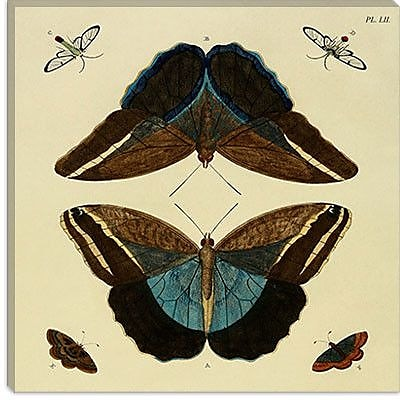 iCanvas ''Plate 52'' by Cramer and Stoll Graphic Art on Canvas; 26'' H x 26'' W x 0.75'' D