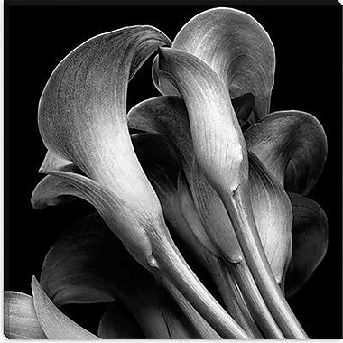 iCanvas ''Lillies'' by Michael Harrison Photographic Print on Canvas; 12'' H x 12'' W x 1.5'' D