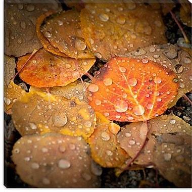 iCanvas ''Fall Rains #2'' by Dan Ballard Photographic Print on Canvas; 12'' H x 12'' W x 1.5'' D