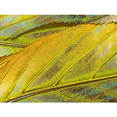 Carlyle Fine Art Nature Yellow Dust by Jordan Carlyle Graphic Art; 54'' x 72''