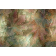 Carlyle Fine Art Nature Fallen Beauty by Jordan Carlyle Graphic Art; 54'' x 72''
