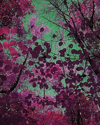 Carlyle Fine Art Nature Berkshire No.2 by Jordan Carlyle Graphic Art; 20'' x 15''