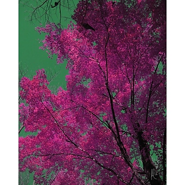 Carlyle Fine Art Nature Berkshire No.1 by Jordan Carlyle Photographic Print; 72'' x 54''