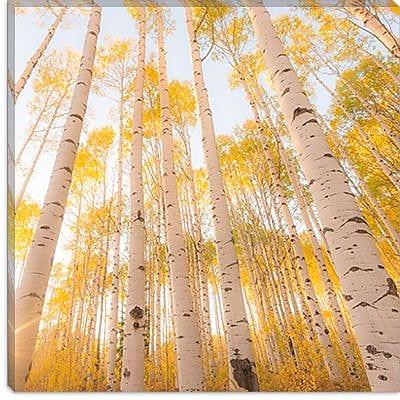iCanvas 'Colorado #2' by Dan Ballard Photographic Print on Canvas; 37'' H x 37'' W x 0.75'' D