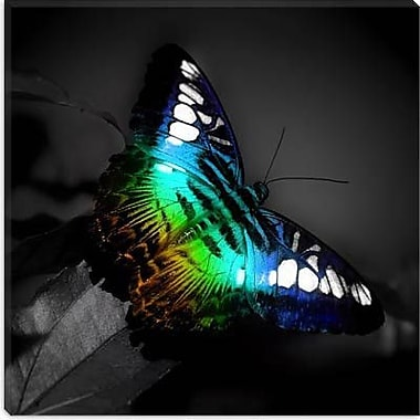 iCanvas Colorful Butterfly Photographic Print on Canvas; 26'' H x 26'' W x 0.75'' D