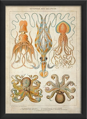 The Artwork Factory Octopods and Decapods Framed Graphic Art; Black