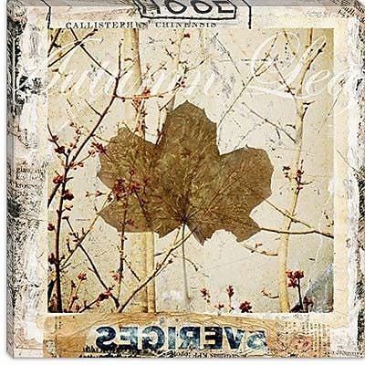 iCanvas ''Autumn Leaf'' by Luz Graphics Graphic Art on Canvas; 26'' H x 26'' W x 0.75'' D