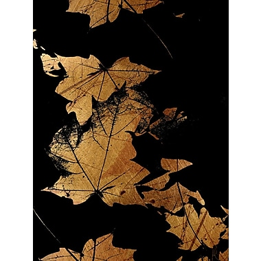 Carlyle Fine Art Nature Autumn by Jordan Carlyle Graphic Art; 20'' x 15''
