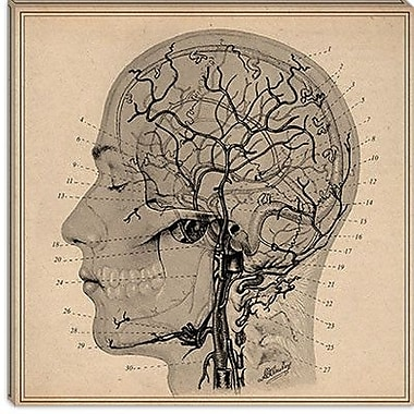 iCanvas Anatomy of Human Head Graphic Art on Canvas; 37'' H x 37'' W x 1.5'' D