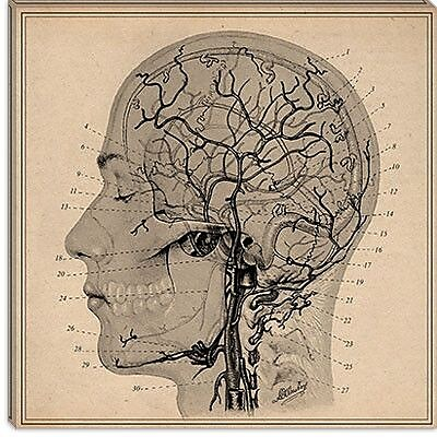 iCanvas Anatomy of Human Head Graphic Art on Canvas; 12'' H x 12'' W x 0.75'' D