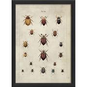 The Artwork Factory Beetles Framed Graphic Art Print; Black