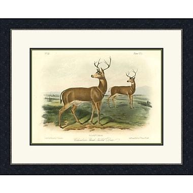 Melissa Van Hise Columbian Tailed Deer Framed Graphic Art