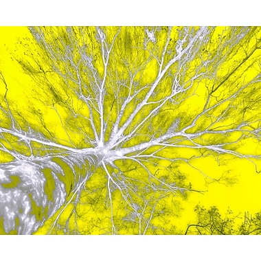Carlyle Fine Art Nature In The Sky by Jordan Carlyle Graphic Art; 36'' x 48''