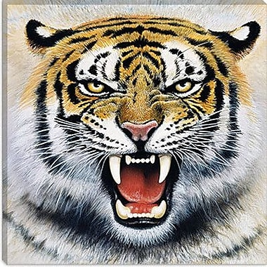 iCanvas ''Tiger'' by Harro Maass Photographic Print on Canvas; 37'' H x 37'' W x 0.75'' D