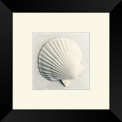 PTM Images Sea Shapes A Framed Painting Print