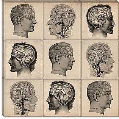 iCanvas Cartography Human Head Anatomy Collage Graphic Art on Canvas; 26'' H x 26'' W x 1.5'' D