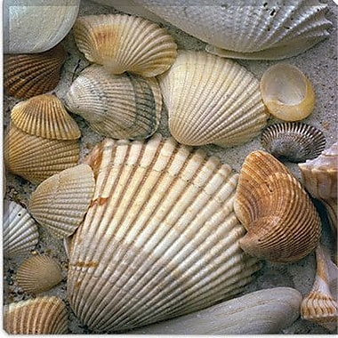 iCanvas ''Sea Shells'' by J.D. McFarlan Photographic Print on Canvas; 18'' H x 18'' W x 0.75'' D