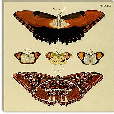 iCanvas ''Plate 217'' by Cramer and Stoll Graphic Art on Canvas; 26'' H x 26'' W x 0.75'' D