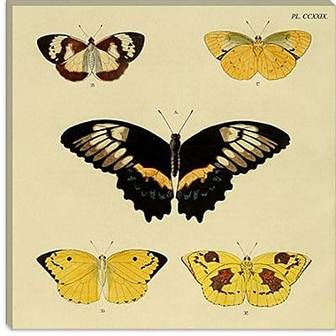iCanvas ''Plate 229'' by Cramer and Stoll Graphic Art on Canvas; 37'' H x 37'' W x 0.75'' D
