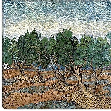iCanvas ''Olive Grove'' by Vincent van Gogh Painting Print on Canvas; 26'' H x 26'' W x 0.75'' D