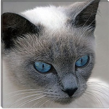 iCanvas ''Blue Eyes'' by J.D. McFarlan Photographic Print on Canvas; 18'' H x 18'' W x 0.75'' D