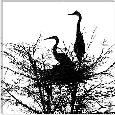 iCanvas ''Birds Nesting'' by Harold Silverman Graphic Art on Canvas; 26'' H x 26'' W x 0.75'' D