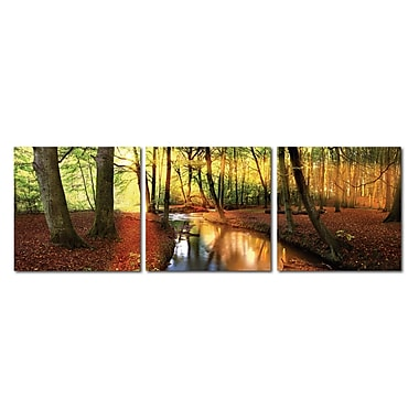 Baxton Studio Forest Oasis 3 Piece Framed Photographic Print on Wrapped Canvas Set