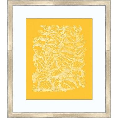 Melissa Van Hise Floral Impression II Framed Graphic Art; Daffodil