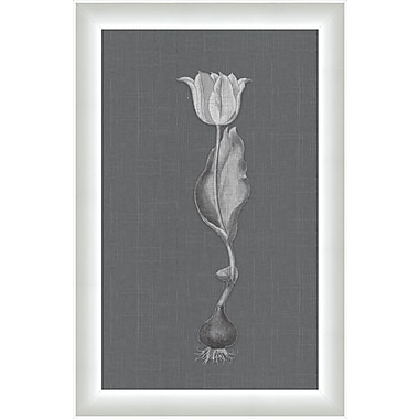 Melissa Van Hise Flora V Framed Graphic Art