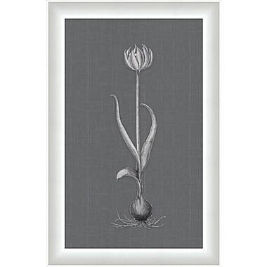 Melissa Van Hise Flora lV Framed Graphic Art
