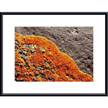 Printfinders Lichen Abstract by John K. Nakata Framed Photographic Print; Black