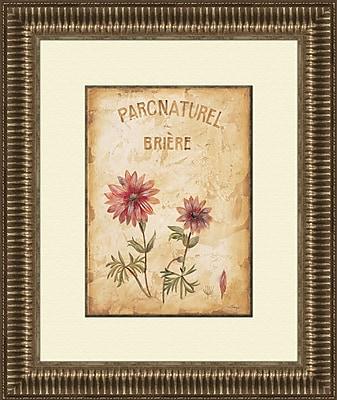 PTM Images Parcnaturel A Framed Graphic Art