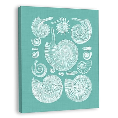 Melissa Van Hise Colorful Shells II Graphic Art on Wrapped Canvas; Spa Blue