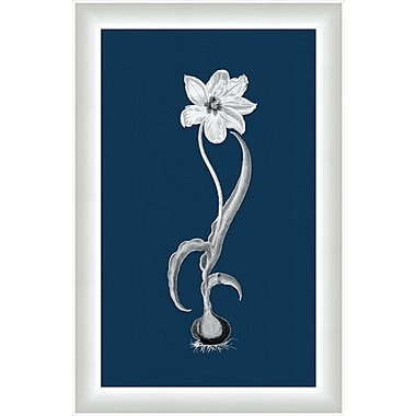 Melissa Van Hise Flora ll Framed Graphic Art