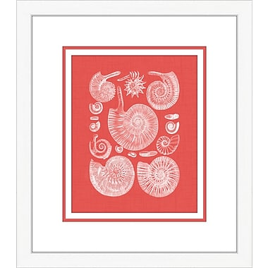 Melissa Van Hise Coquillage II Framed Graphic Art; Red
