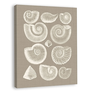 Melissa Van Hise Colorful Shells I Graphic Art on Wrapped Canvas; Taupe