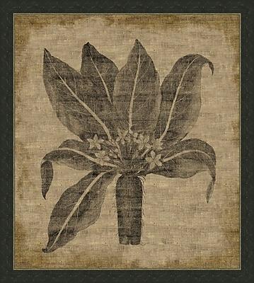 Melissa Van Hise Flora IV Framed Graphic Art