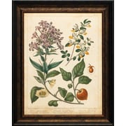 North American Art 'Non Embellished Enchanted Garden II' by Suydenham Edwards Framed Graphic Art