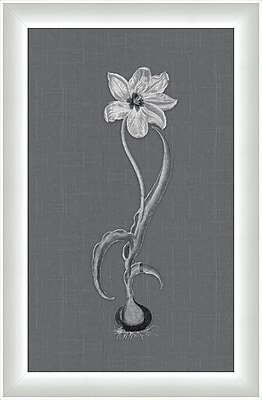 Melissa Van Hise Flora lll Framed Graphic Art