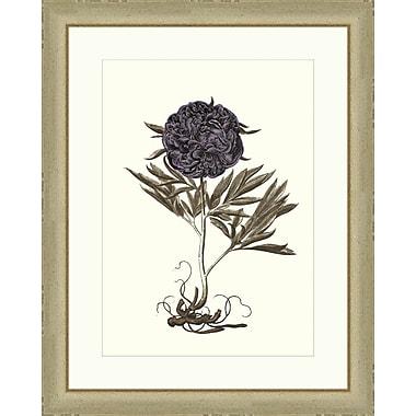 Melissa Van Hise Buchoz Flowers III Framed Graphic Art