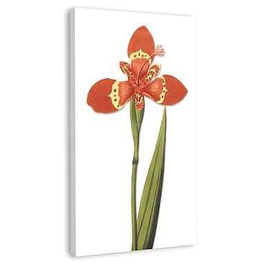 Melissa Van Hise Tiger Lily I Graphic Art on Wrapped Canvas