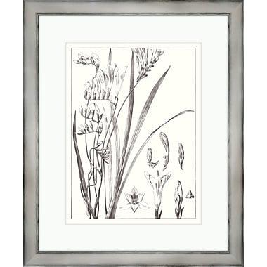 Melissa Van Hise 'Flora III' Framed Graphic Art Print