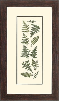 Melissa Van Hise Ferns I Framed Graphic Art