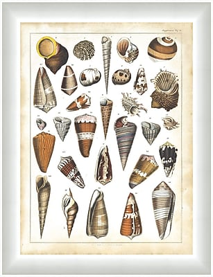 Melissa Van Hise Oken Shells ll Framed Graphic Art